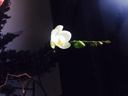 写真 2015-03-22 8 50 59 (1)